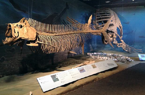 ND skeleton.png