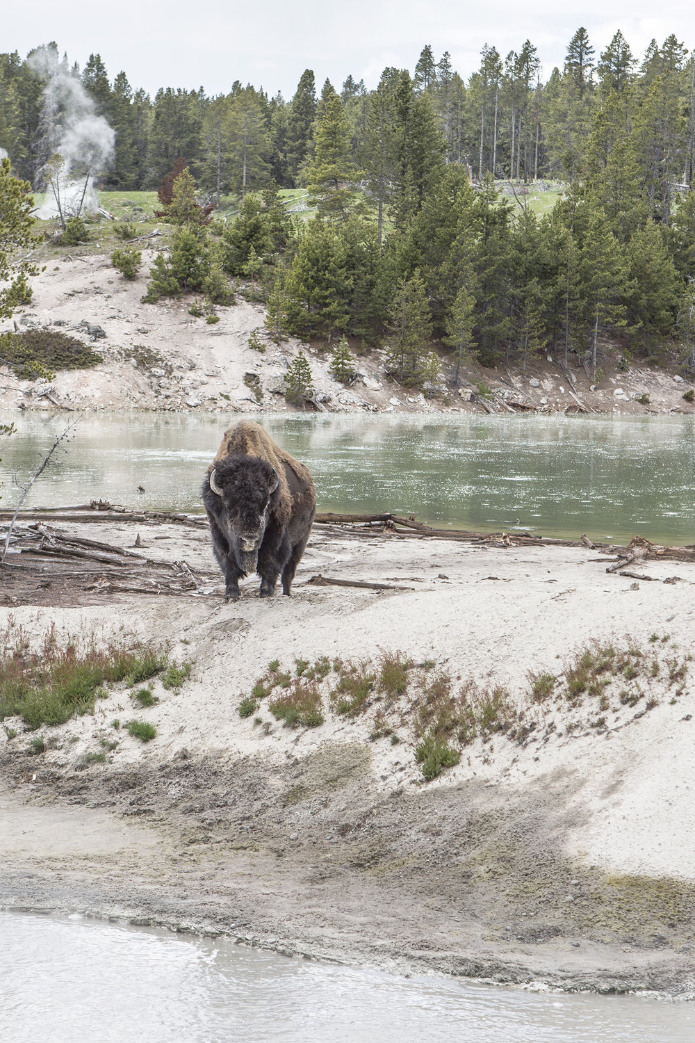 GREETINGS_YELLOWSTONE_005.jpg