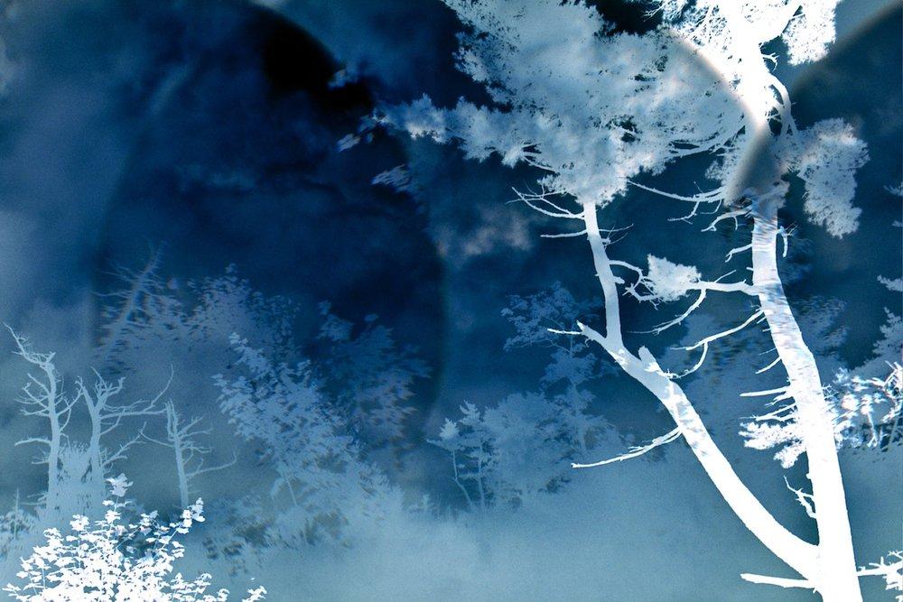 Leah Oats  Transitory Space-Nova Scotia Canada Blue Tree 106 C-Print 16 x 20