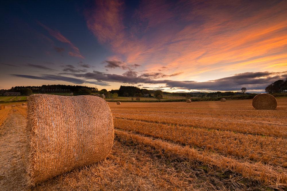 rolling hay bales