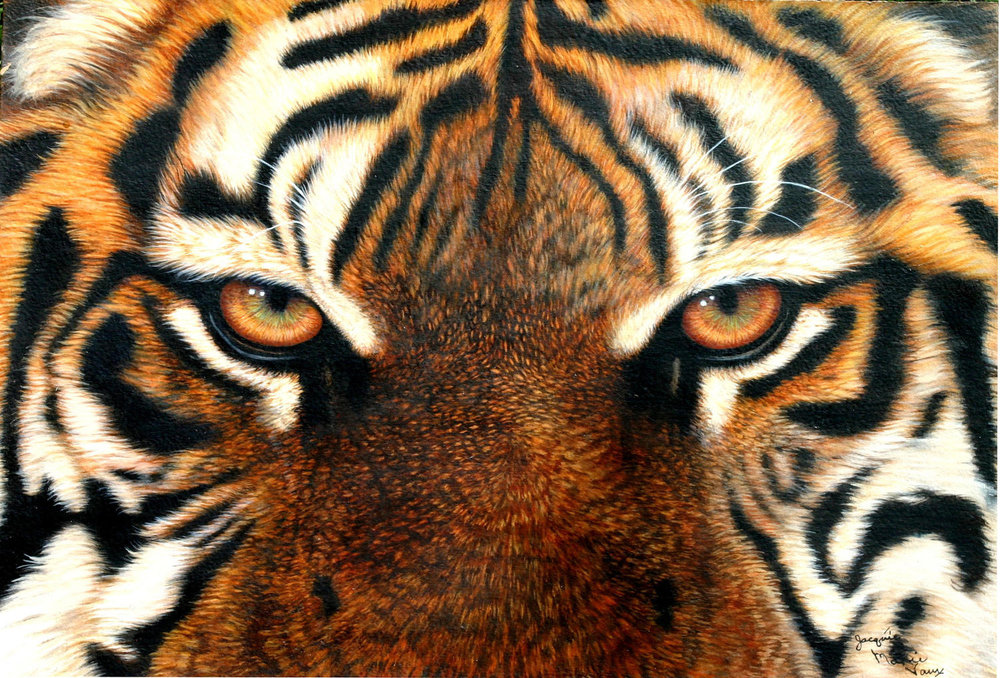 Eyes-Of-Tiger-1500-Cm.jpg
