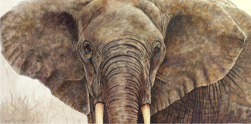 African Elephant-Cm.jpg