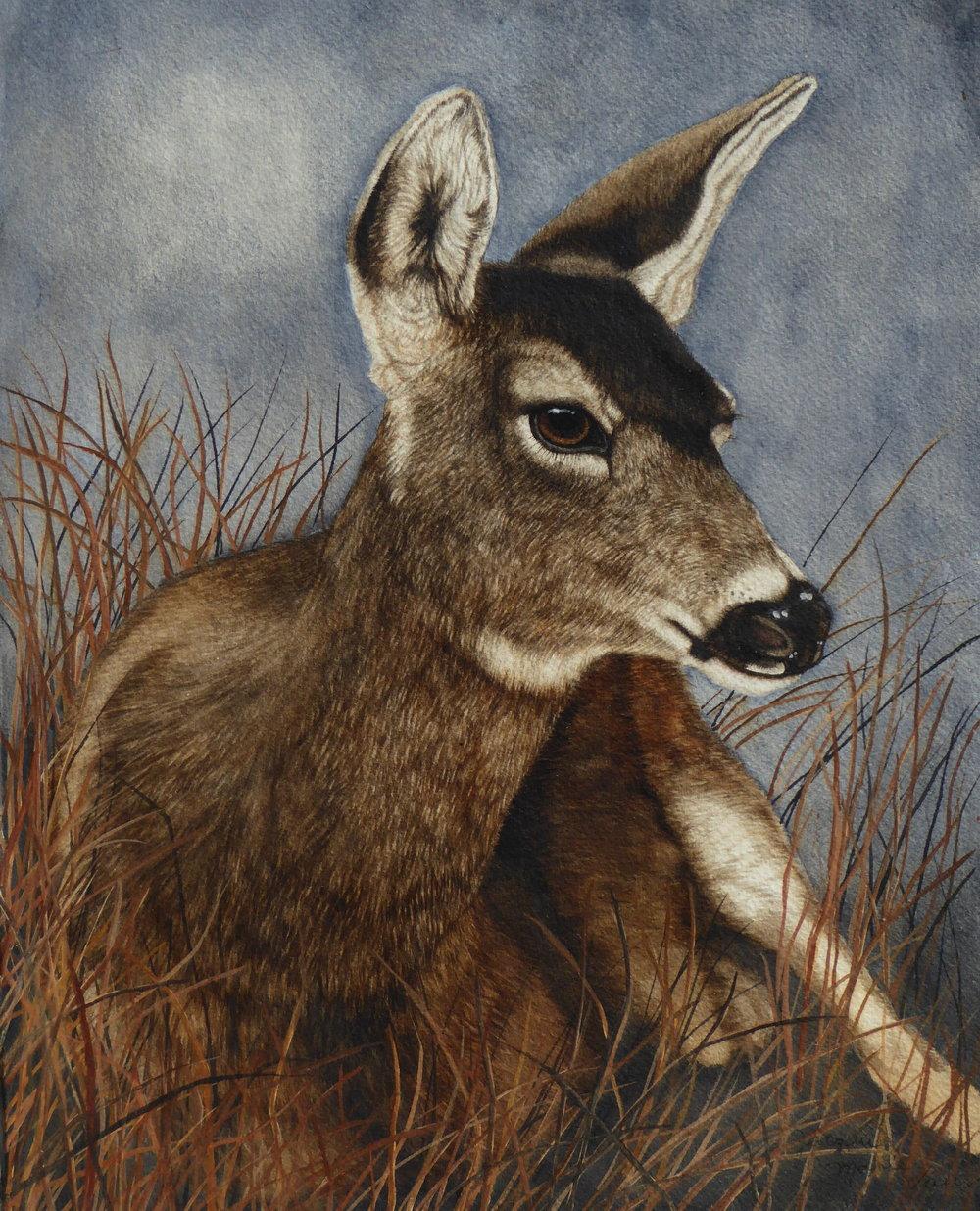 Mule Deer 2019.jpg