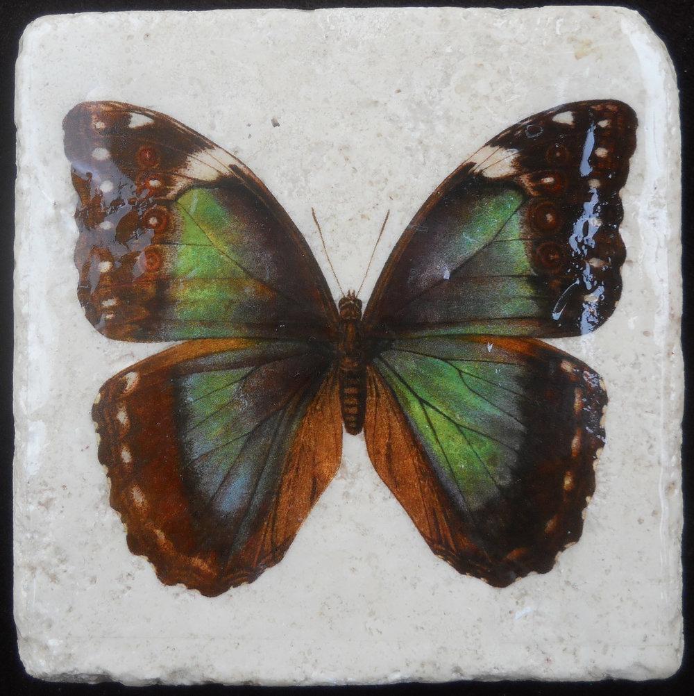 Green Butterfly.JPG