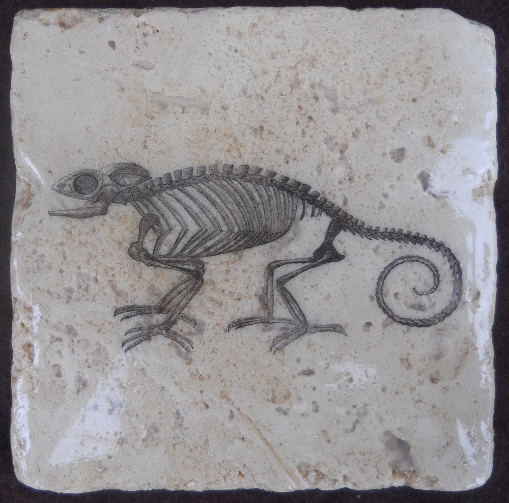 Chameleon Skeleton.jpg