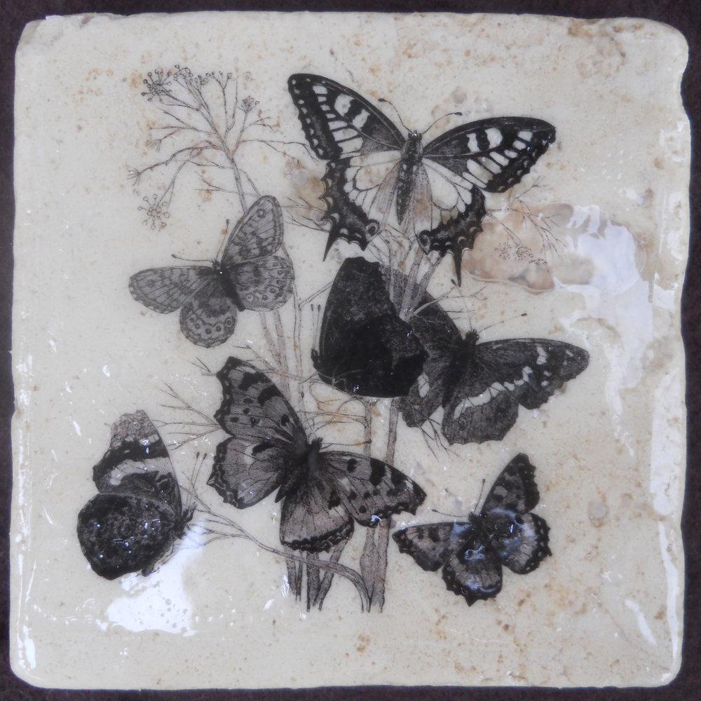 BW Butterflies.jpg