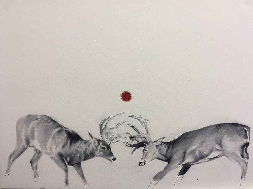 Study for whitetails , 2015.Huile et fusain sur toile. 2015. 36 x 48 pouces.