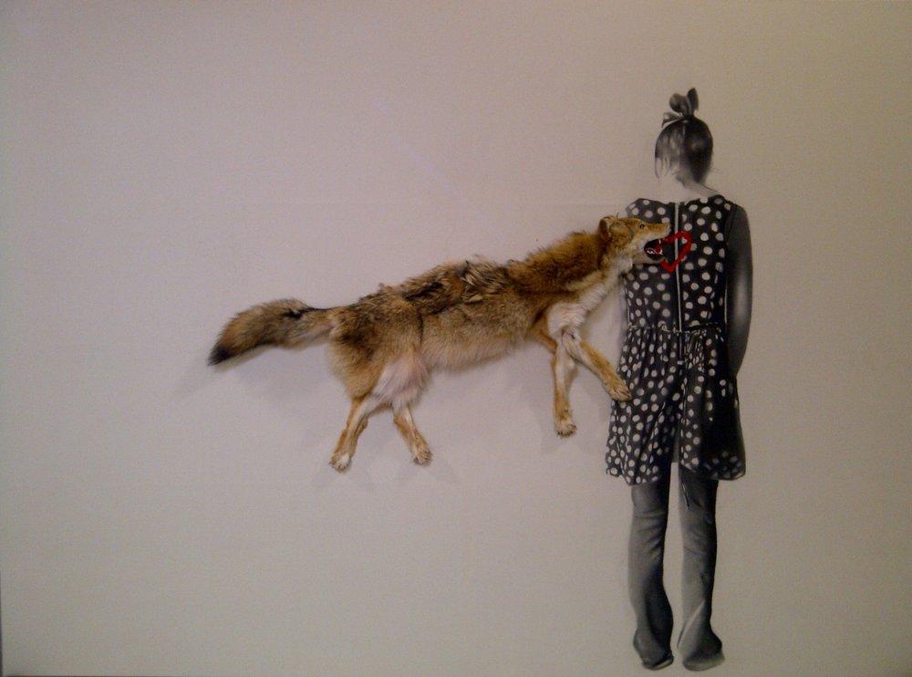 Roadkill coyote , 2010. Huile, fusain et coyote sur toile. 78 x 108 pouces.