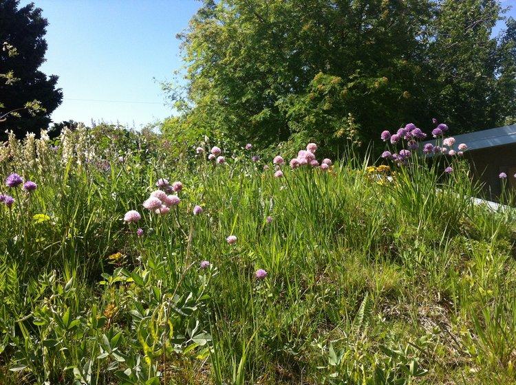 sustainable landscape calgary