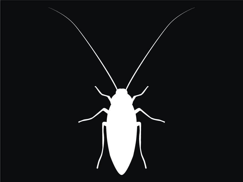 Cockroach-white-4-3.jpg