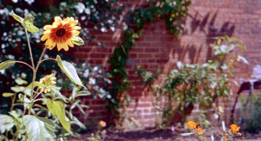 Butterfly Garden00000.jpg