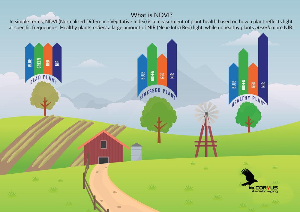 Corvus NDVI Infographic