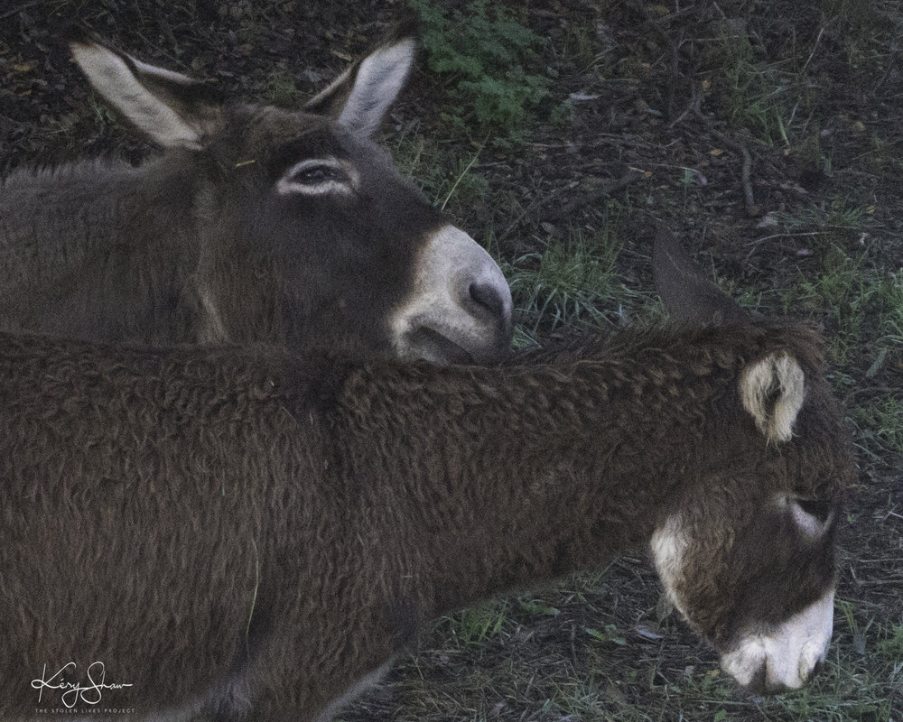 DonkeysArrived.jpg