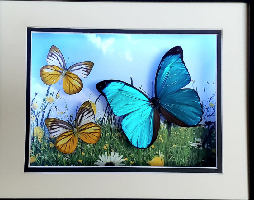 BUTTERFLY CREATIONS - Winged Wonders