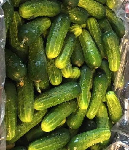 Pickles & Hummus - Pickled Paradise