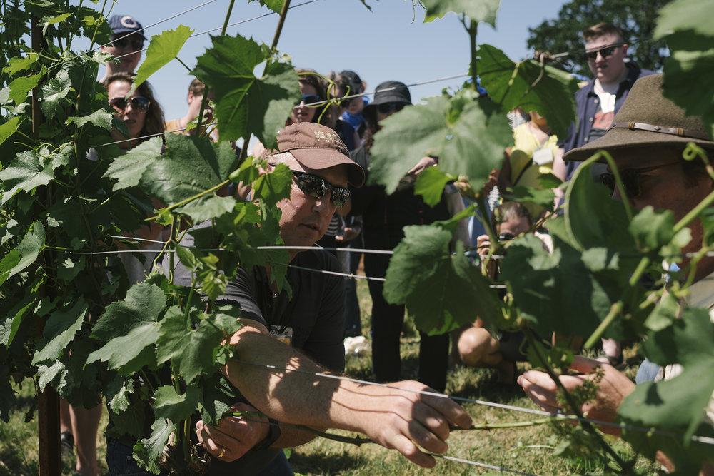 vineyard_bruce_web.jpg