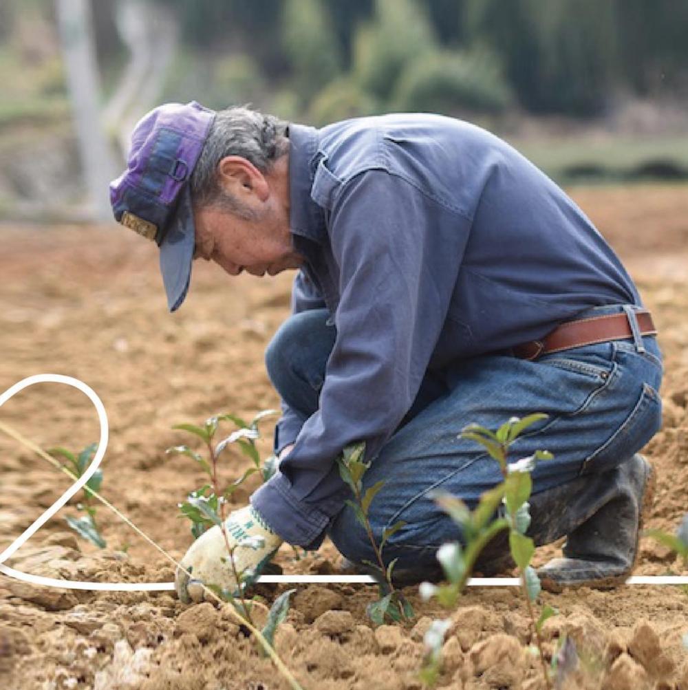 Toshiaki Kinezuka planting a new crop