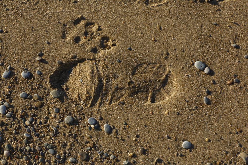 - footprints