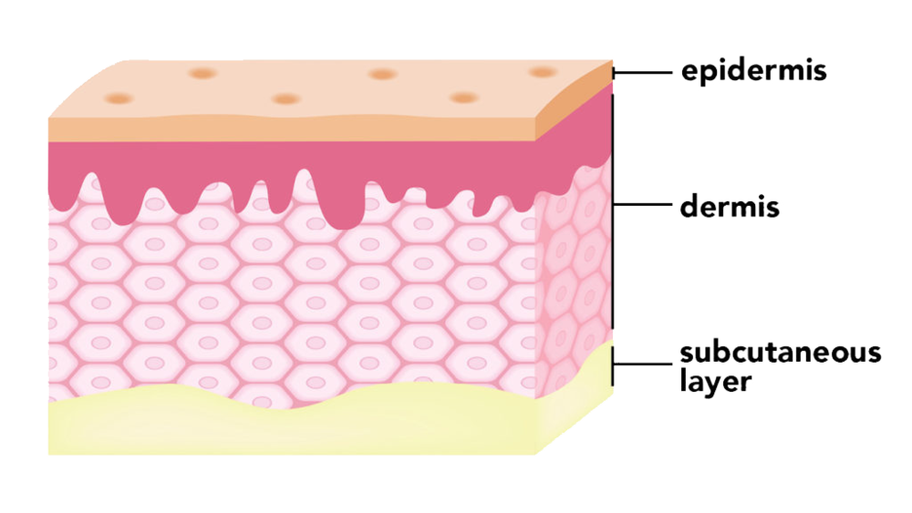 skin_layers.png