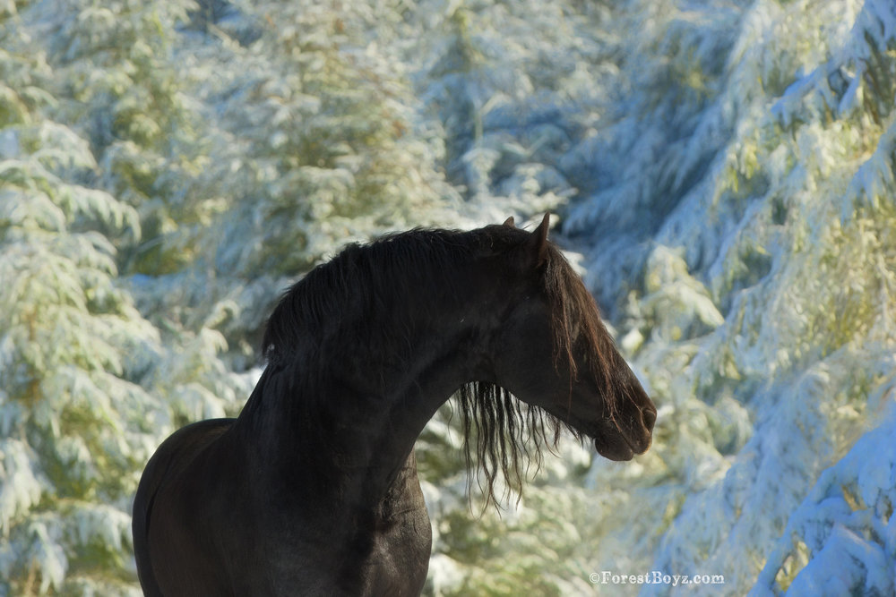 Snow boyz