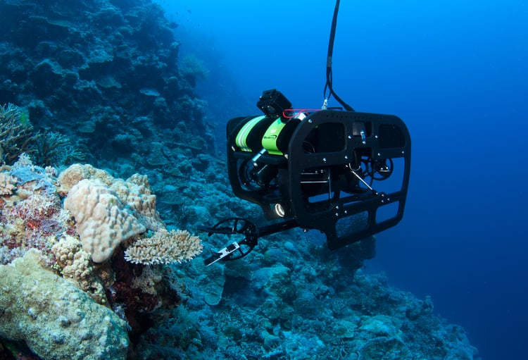 Catlin+Seaview+Survey.+Deep+Reef_ROV3+(1).jpg