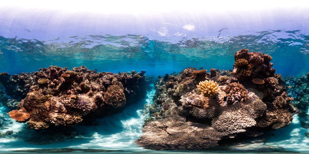 012+TOA+-+Australia+-+Osprey+Reef+00600667.jpg