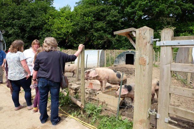 Visitors admiring the pigs on Open Farm Sunday 2018