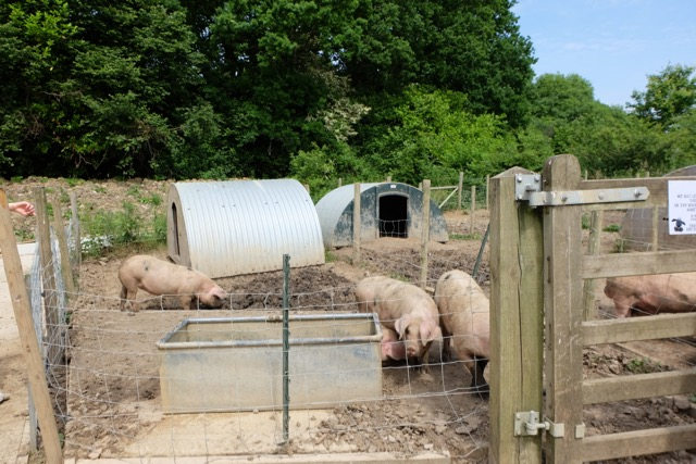 One of the pig enclosures at Hill House Farm