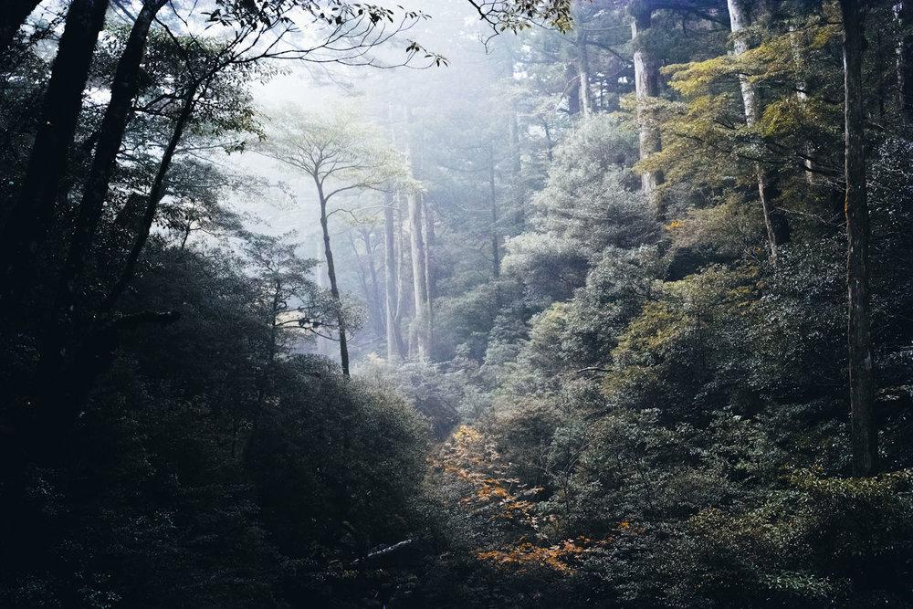 Shiratani_Unsuikyo_yakushima_japan_thevoyageur-1-sur-1.jpg