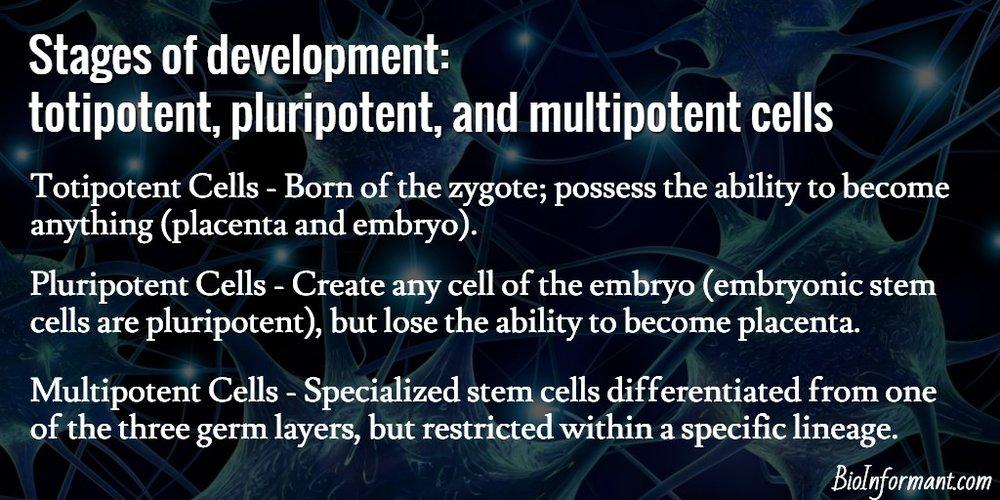 Totipotent-Pluripotent-Multipotent.jpg