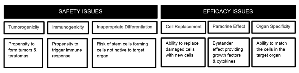Stem-Cell-Therapeutics-Balancing-Safety-and-Efficacy.png