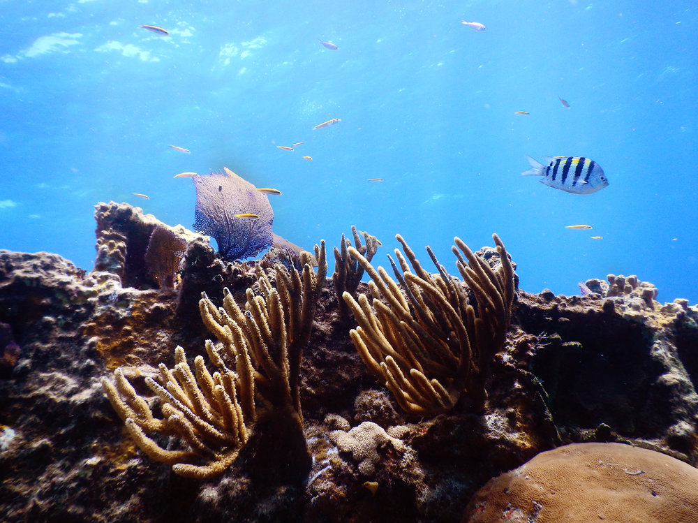A reefscape off the coast of Nassau.