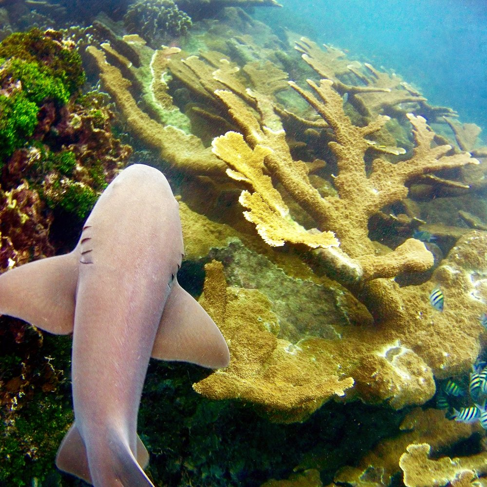 my road to reefs -