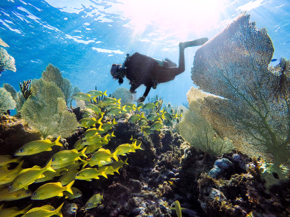 Performing AGRRA surveys (rapid ecological assessment of the reefs) off the coast of southern Abaco. Photo by Alannah Vellacott.