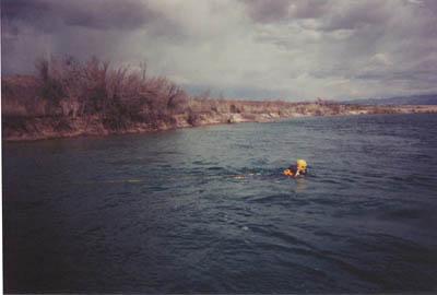 line swimmer2.jpg