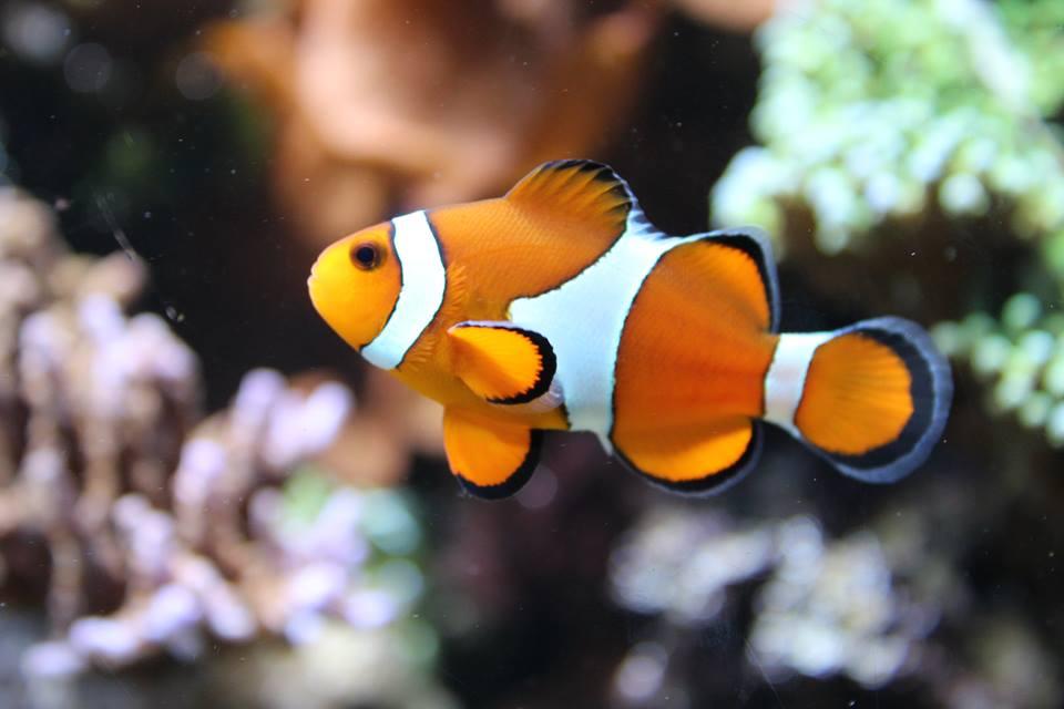 Taken at London Zoo