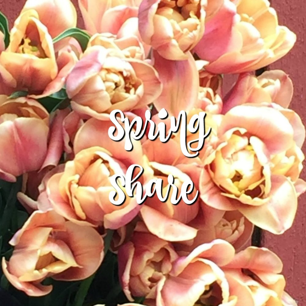 Spring Share - no copy.jpg