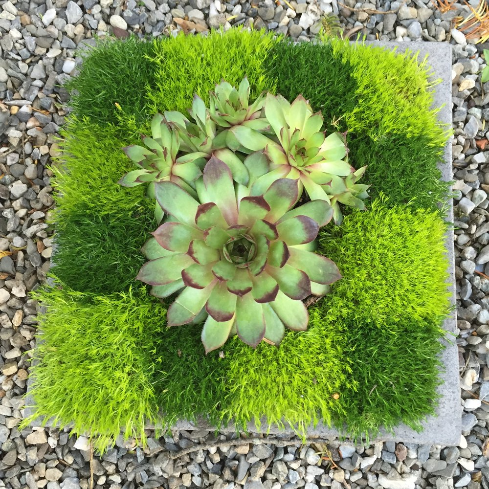 Sweet Earth Container - moss & sedum.JPG