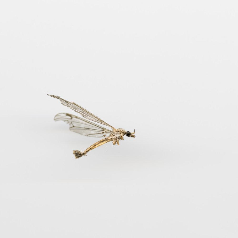 insekt7x7006-Edit.jpg