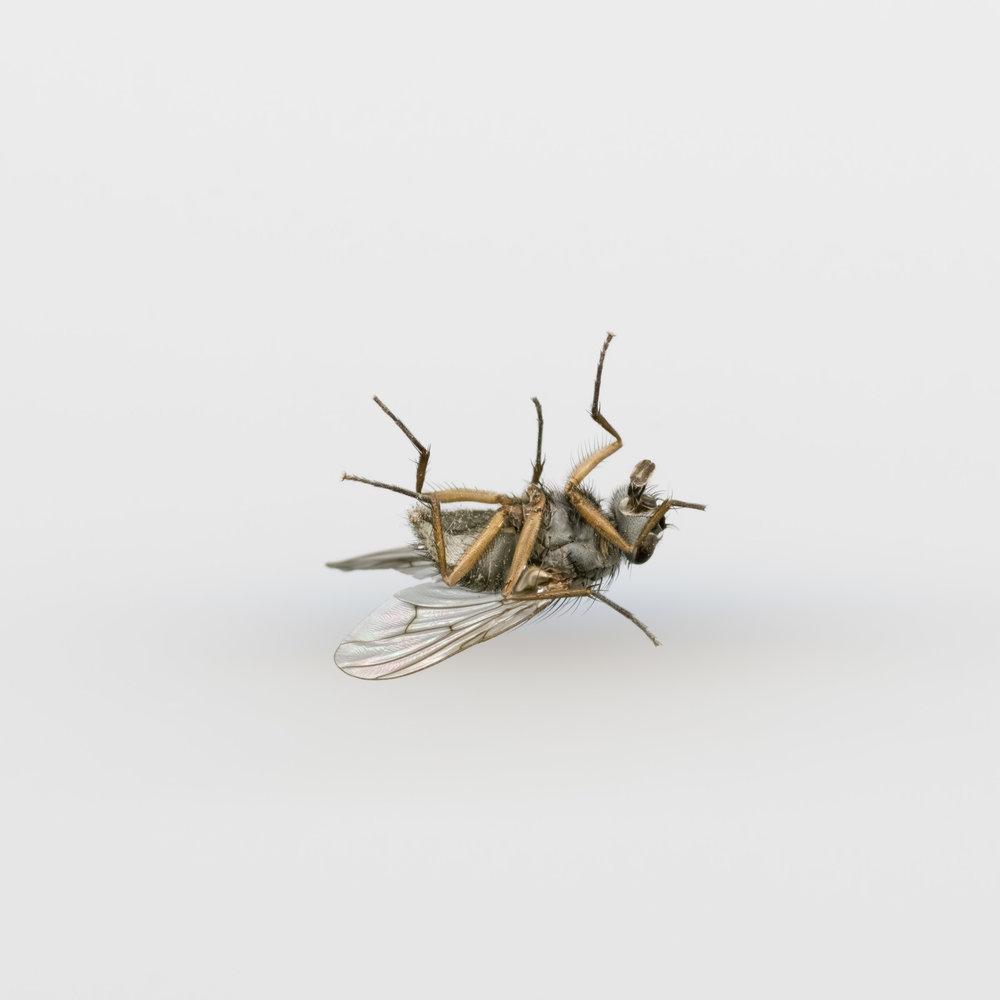 insekt7x7039-Edit.jpg