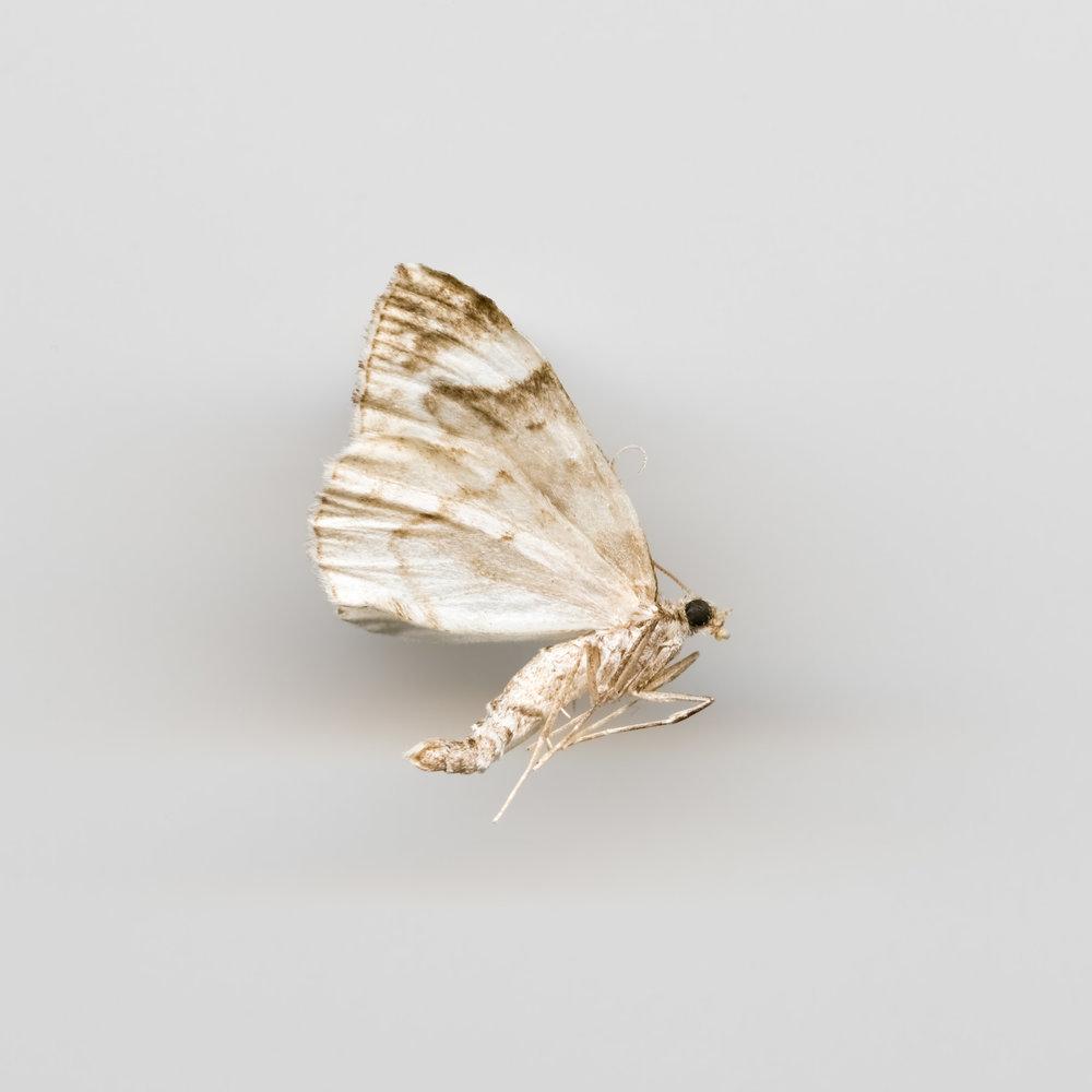 insekt7x7061-Edit.jpg
