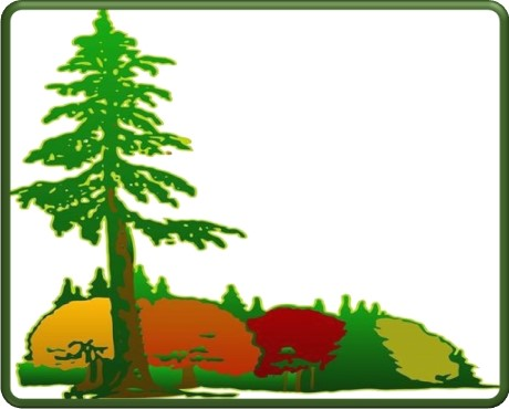 Tall Timbers Tree & Shrub Service - Colorado Springs - Tree Care, Tree Spraying, Tree Removal, Tree Trimming, Tree Prune