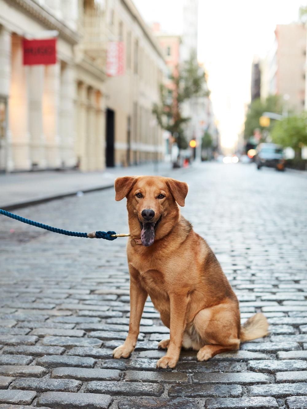 Leo/Best Friends Animal Shelter