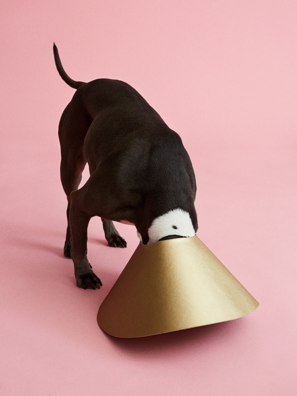 Cone of Shame