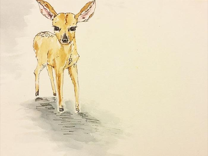 deer12.jpg