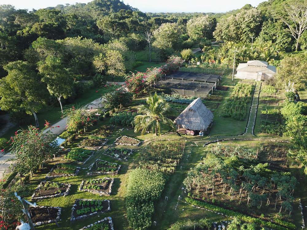 Farm - We are proud to produce approximately 70% of the food we serve at the Jungle Farm Restaurant. From our large organic gardens and pasture raised chickens to our lamb pastures, you will enjoy exploring the farm on your own or ask our front desk clerk about a guided tour.