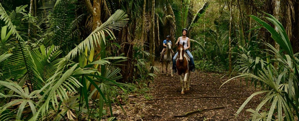 Horseback Riding - Alvaro, an experienced rider and cowboy leads our Horse Rides on trails through our unique tropical rain forests, cacao plantations, sugarcane fields and other aspects of Copal Tree Lodge Farms. Wending through the cacao plantations and jungle you can catch glimpses of the Rio Grande river. Giant Fig, Ceiba and Gumbo-Limbo trees form the primary canopy, while the massive Cohune Palms used for thatch and tasty palm heart cabbage grow in dense stands. Howler monkeys, parrots, toucans are often spotted on the trails. Alvaro might even be able to point out jaguar, puma and tapir tracks. These animals, while not often seen, leave their imprints in the soft jungle soil. Our horses Jim, Pinto, Queen and Max are very calm and know the trails very well. No riding experience is necessary, but it is helpful to be prepared for high humidity, and possibly some mosquitoes.Schedule:08:30 – 09:30/10:30 Monday to Friday