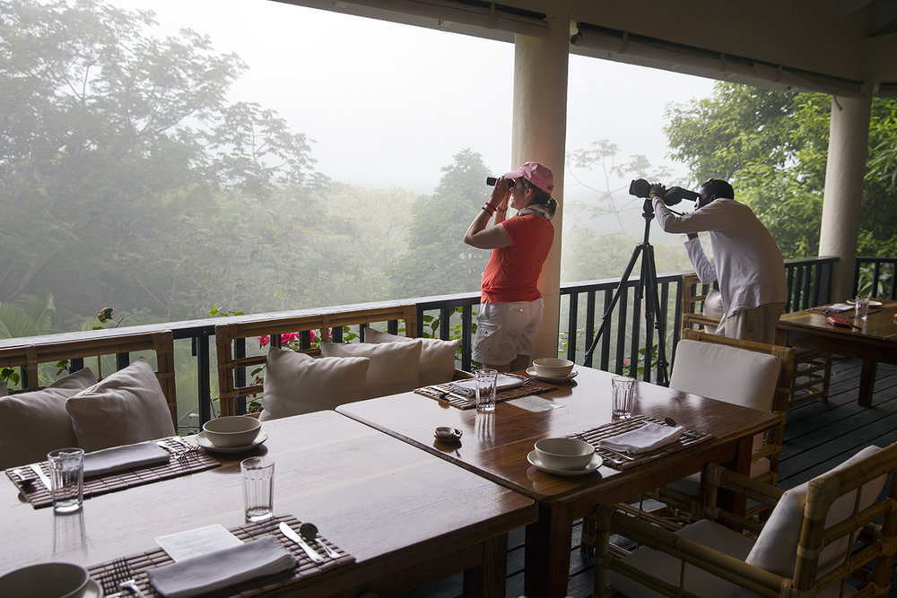 A Half or Full Day of Bird Watching - A full day birding is an exploration of the best of what Copal Tree Lodge has to offer. Meandering around our grounds, in the jungle and along the river's edge you will have the opportunity to see some of the broadest ranges of species the region has to offer. From soaring Raptors to Kingfishers, Trogans, Euphonias, Hummingbirds, Herons, Manikins and Parrots, count on a Big Day!Schedule: Based on request.