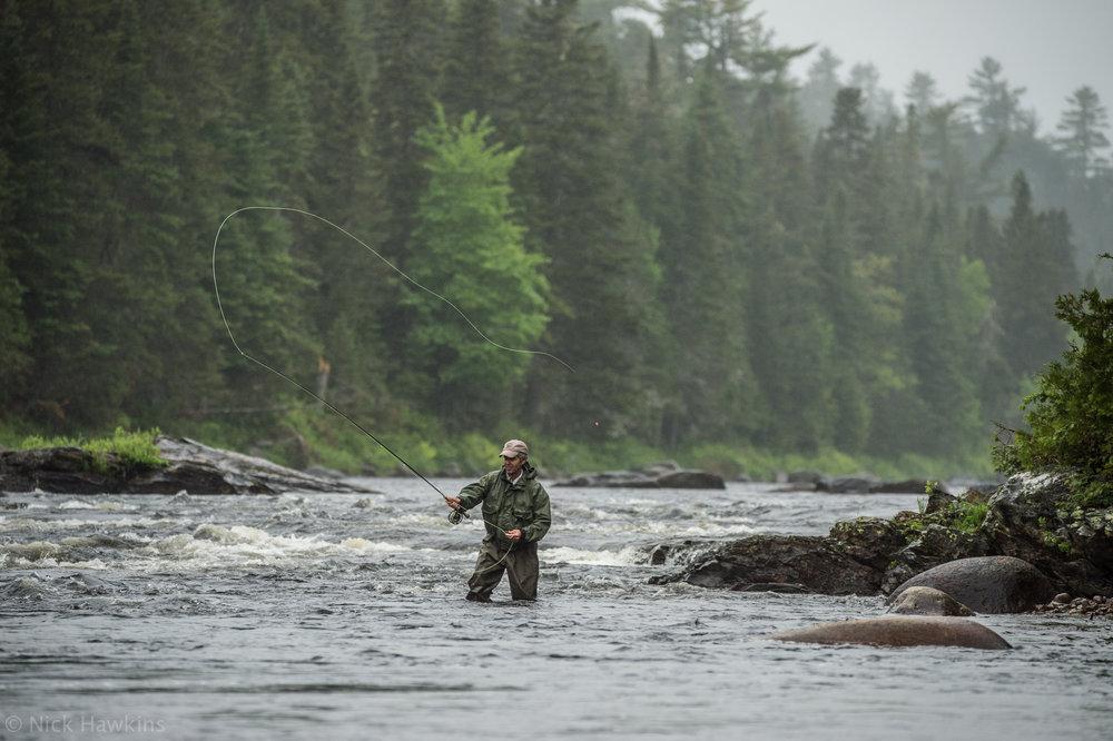 saving-salmon-Nick-Hawkins-7499.jpg