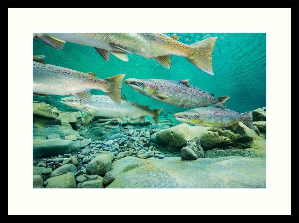 mockup-salmon-print.jpg